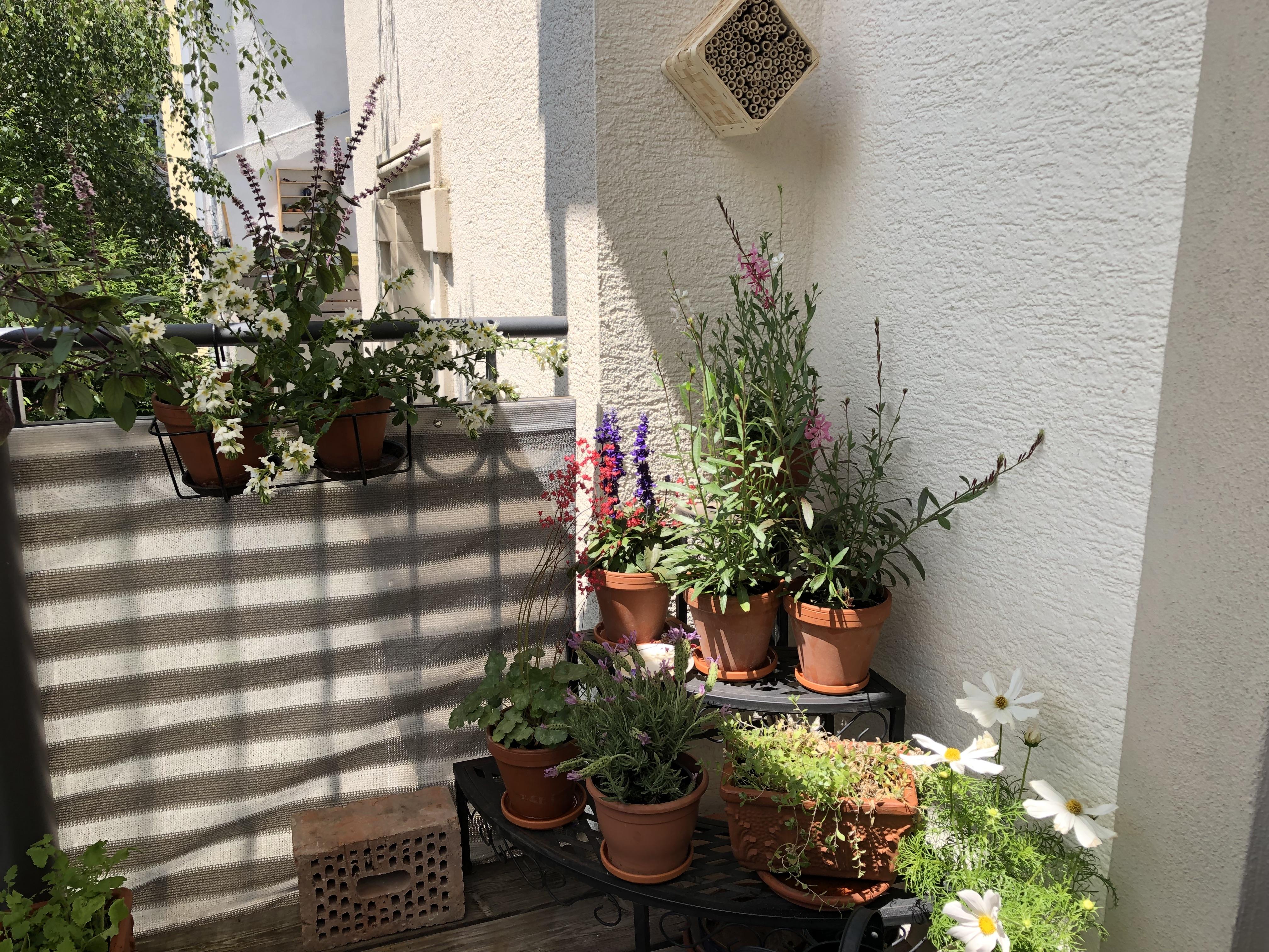 Bienenfreundliche Balkonpflanzen Tipps für den bienenfreundlichen Balkon