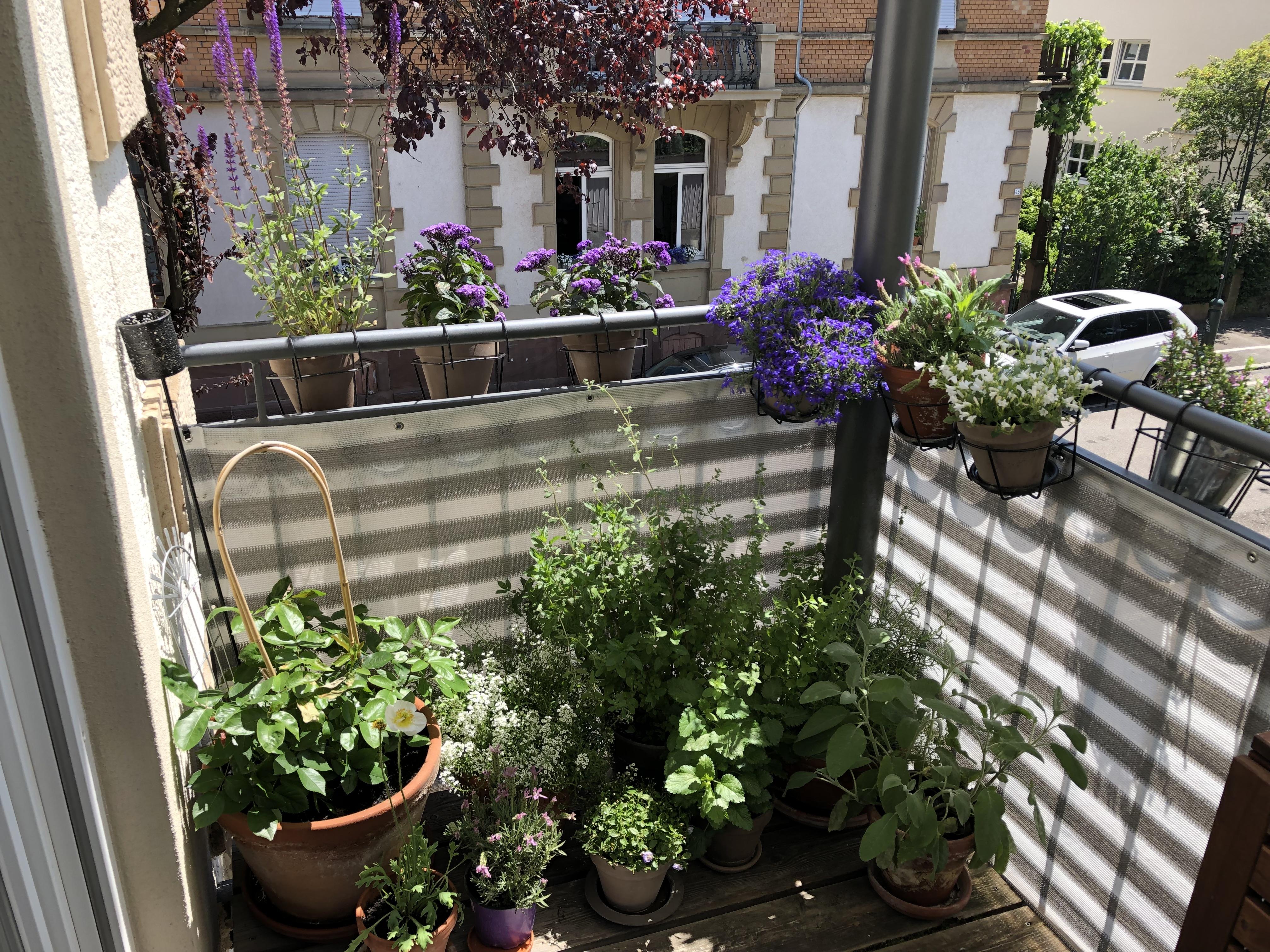 Der bienenfreundliche Balkon mit Balkonpflanzen für Bienen